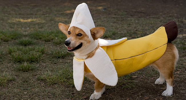 Article_DogCostumes_1
