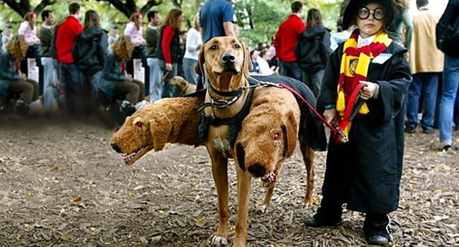 Article_DogCostumes_2