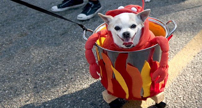 Article_DogCostumes_4