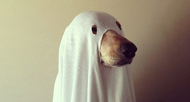 Article_DogCostumes_5